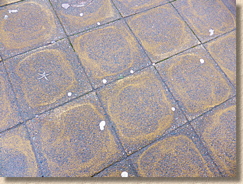 differential curing marks on buff flagstones