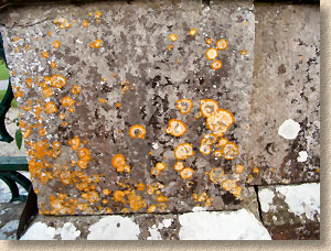 black, grey and orange lichens