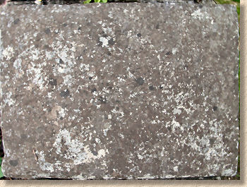 Pavingexpert Dealing With Lichens