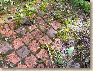 weeds on clay pavers